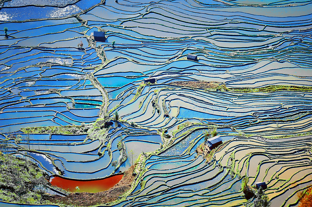 Photograph Terraced rice fields # 3 by Ngo Nguyen Huynh   Trung Tin on 500px
