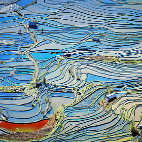 Terraced rice fields # 3 by Ngo Nguyen Huynh   Trung Tin (rongreuphotography)) on 500px.com