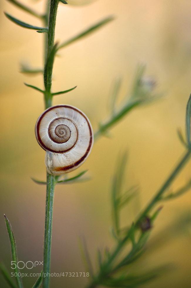 Photograph Snail by Mirka Wolfova on 500px