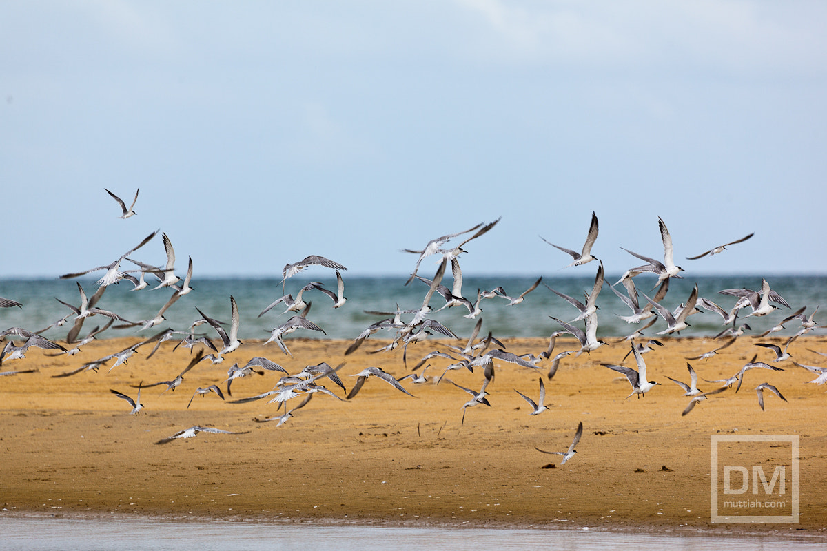 Photograph Birds in Flight by Davo Muttiah on 500px