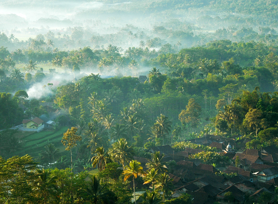 Photograph Morning Mist by Edi Wibowo on 500px