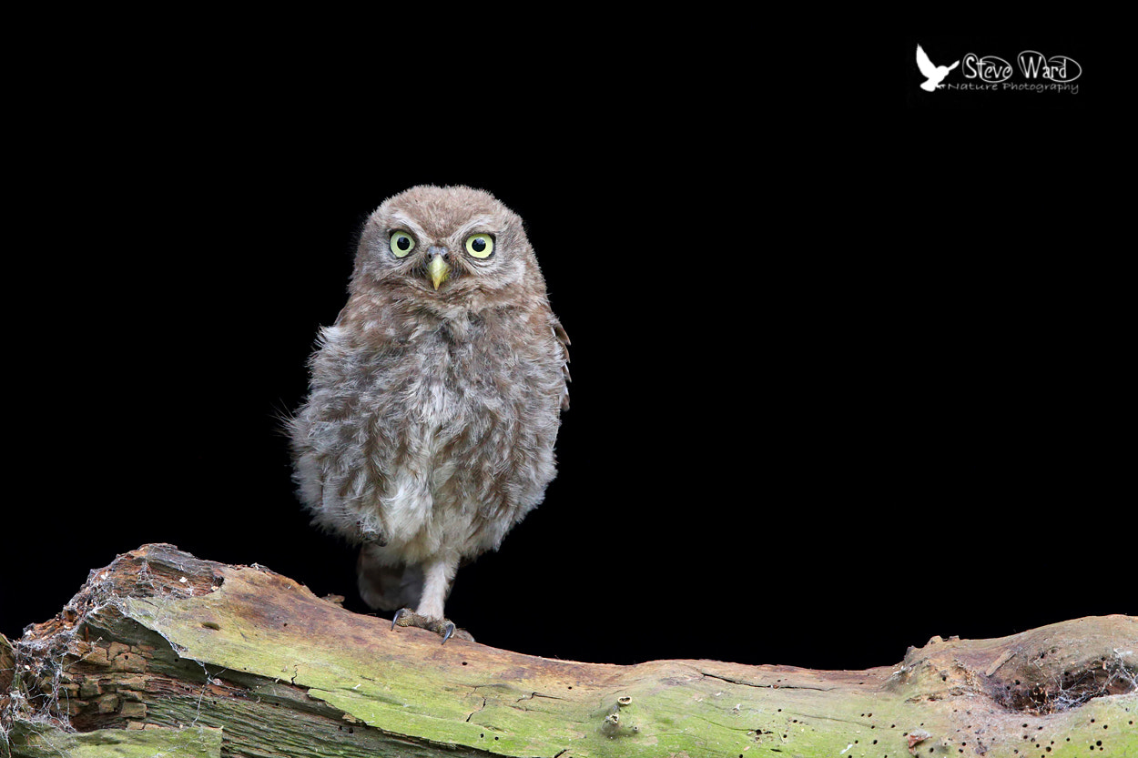 Photograph Simon says stand on one leg by Steven Ward  on 500px