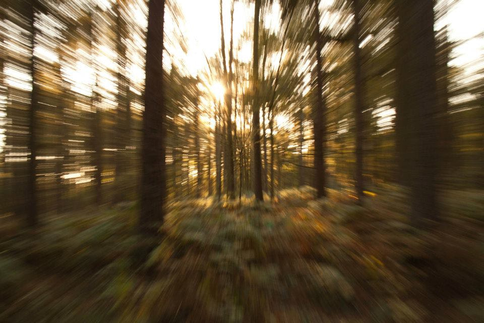 Photograph Through the Trees by Michelle Howard on 500px