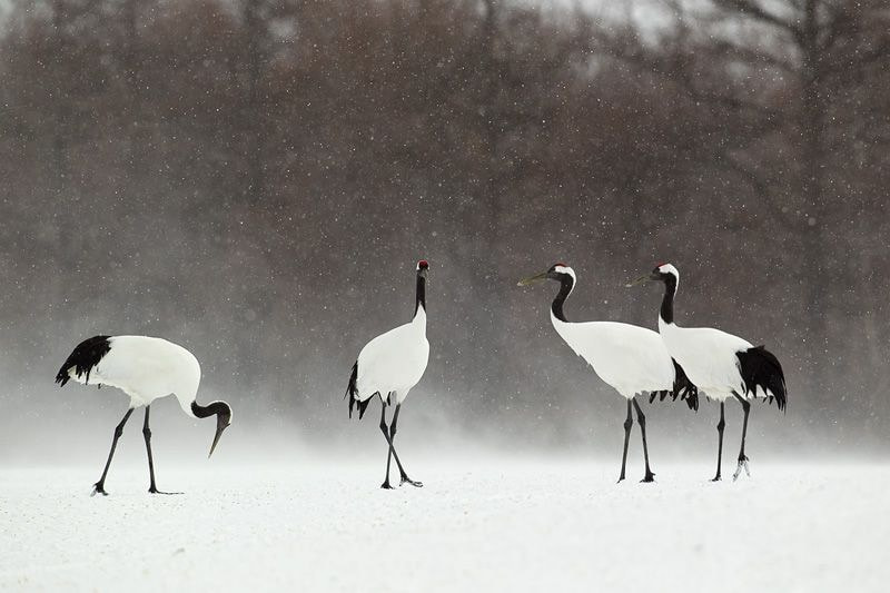 Photograph cranes by Peter Edge on 500px