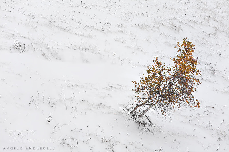 Photograph First snow by Angelo Andreolle on 500px