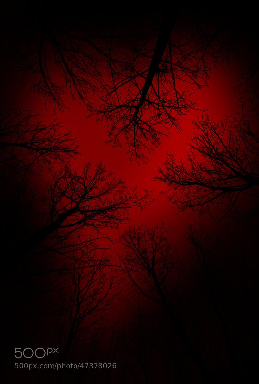 Photograph En el corazón del bosque by Luis Mariano González on 500px