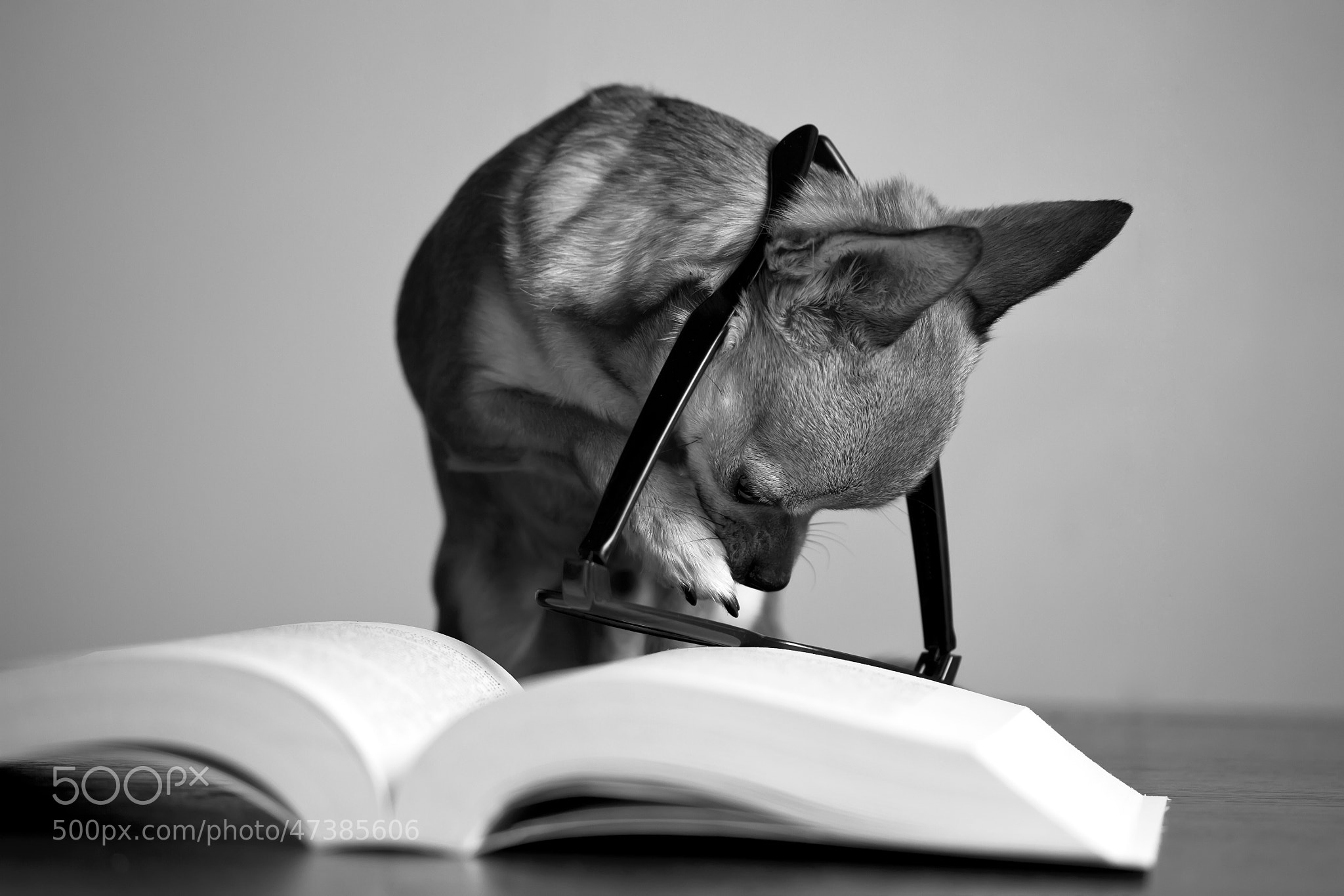 Photograph Learning to read by Heiðbrá Steinþórsdóttir on 500px