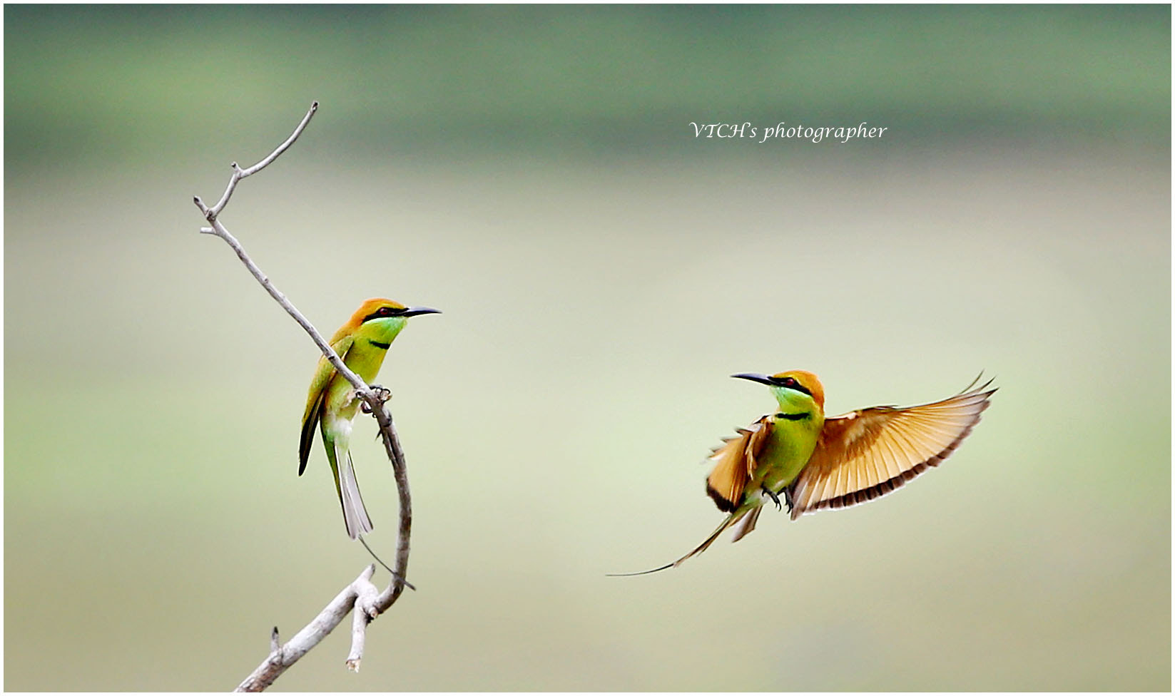 Photograph Bye bye ! by Vu Tuong Chieu on 500px