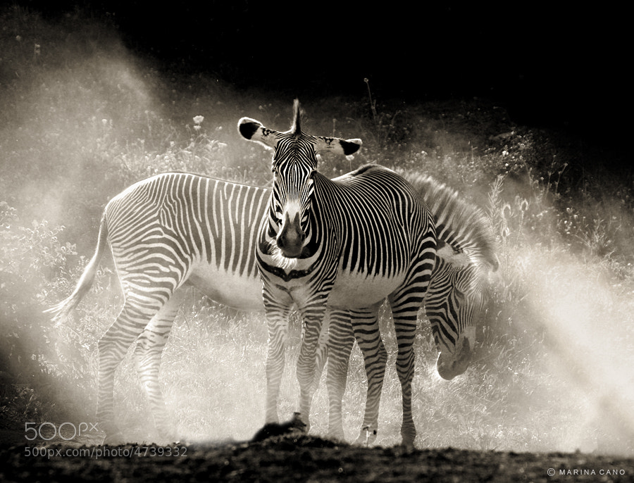 Photograph Safari by Marina Cano on 500px