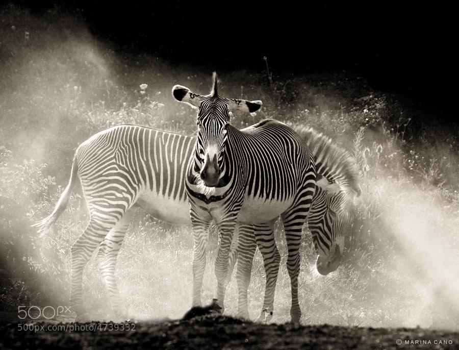 Photograph Safari by Marina Cano on 500px