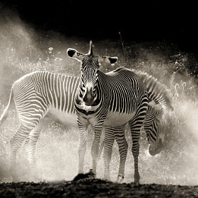 Safari by Marina Cano (MarinaCano)) on 500px.com