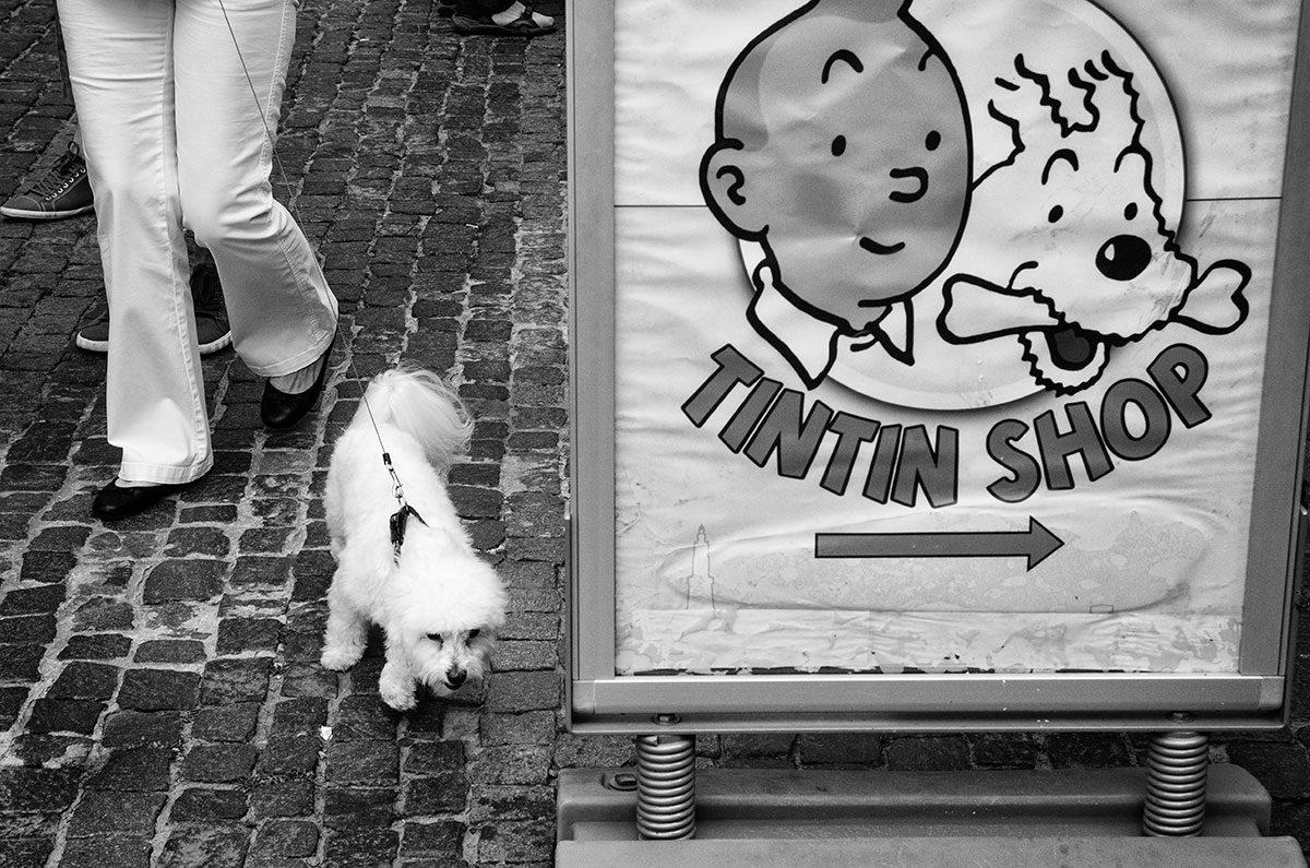 Photograph Tintin Shop by Saumalya Ghosh on 500px