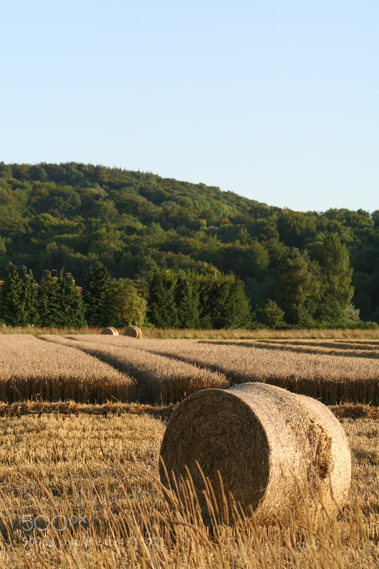 Photograph Harvest by Tim Forster on 500px