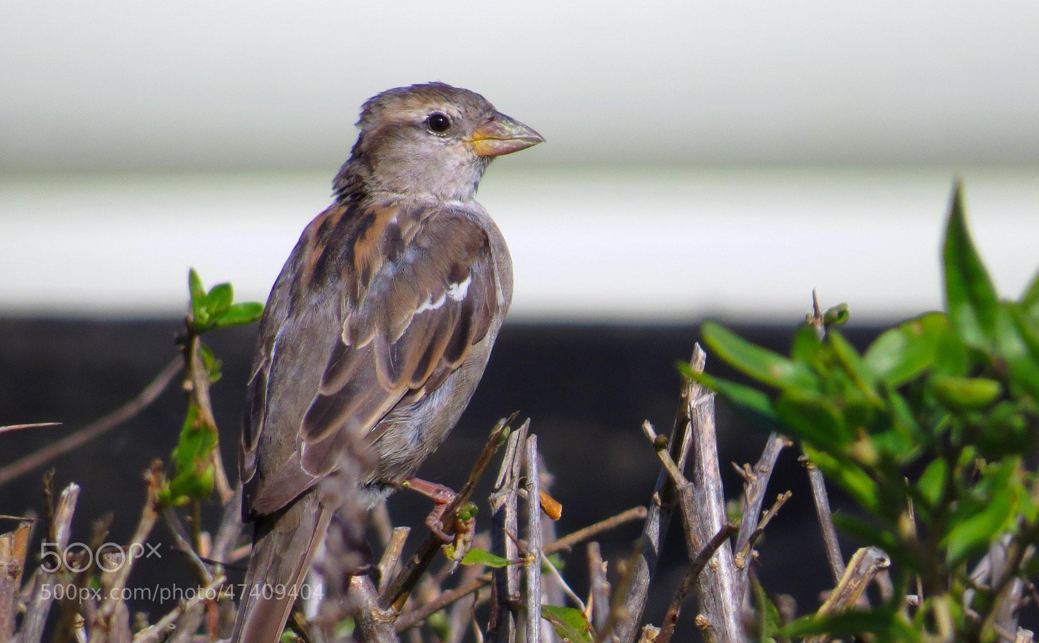 Photograph Bird by Sonny Kraack on 500px