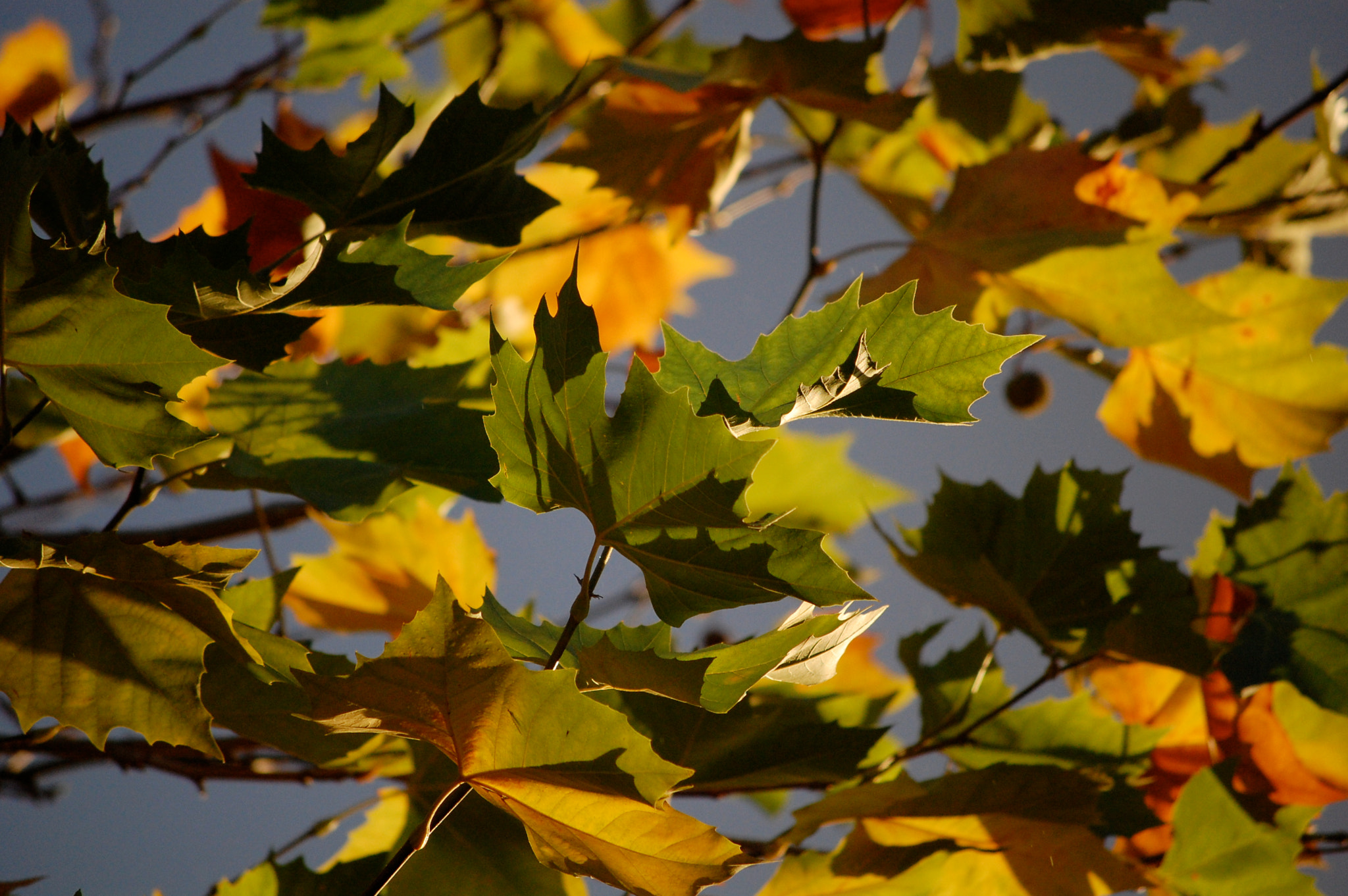 Photograph Afternoon Leaves by dickon . on 500px