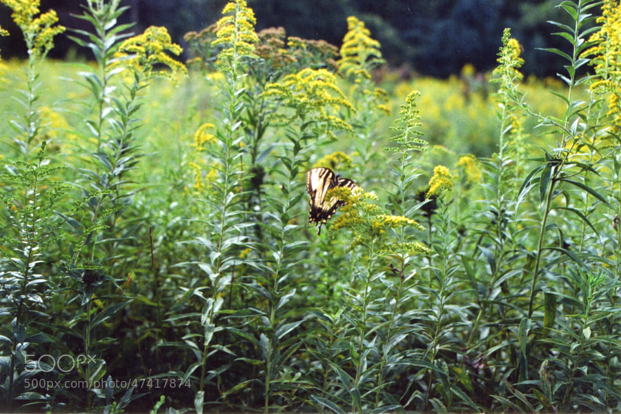 Butterfly thingie #Film