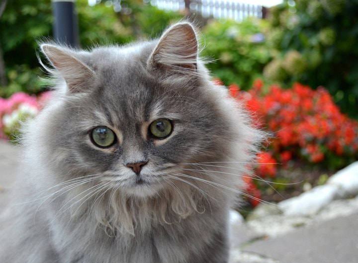 Photograph Cat by Francesca Baggio on 500px