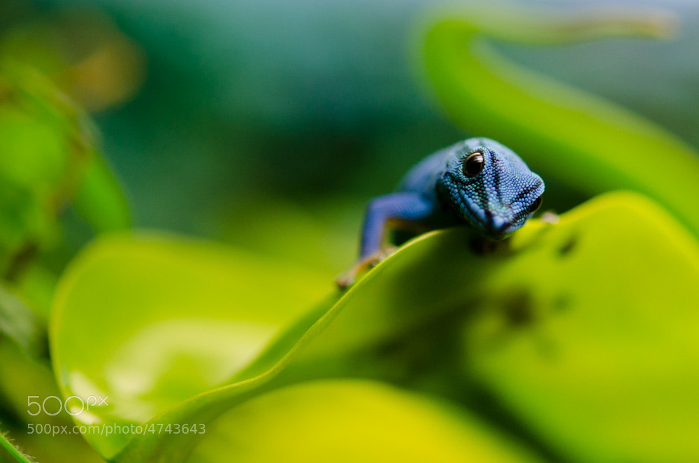 Photograph The Blue Guy by Inge Aukrust on 500px
