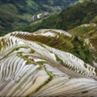 Постер, плакат: longji rice terraces