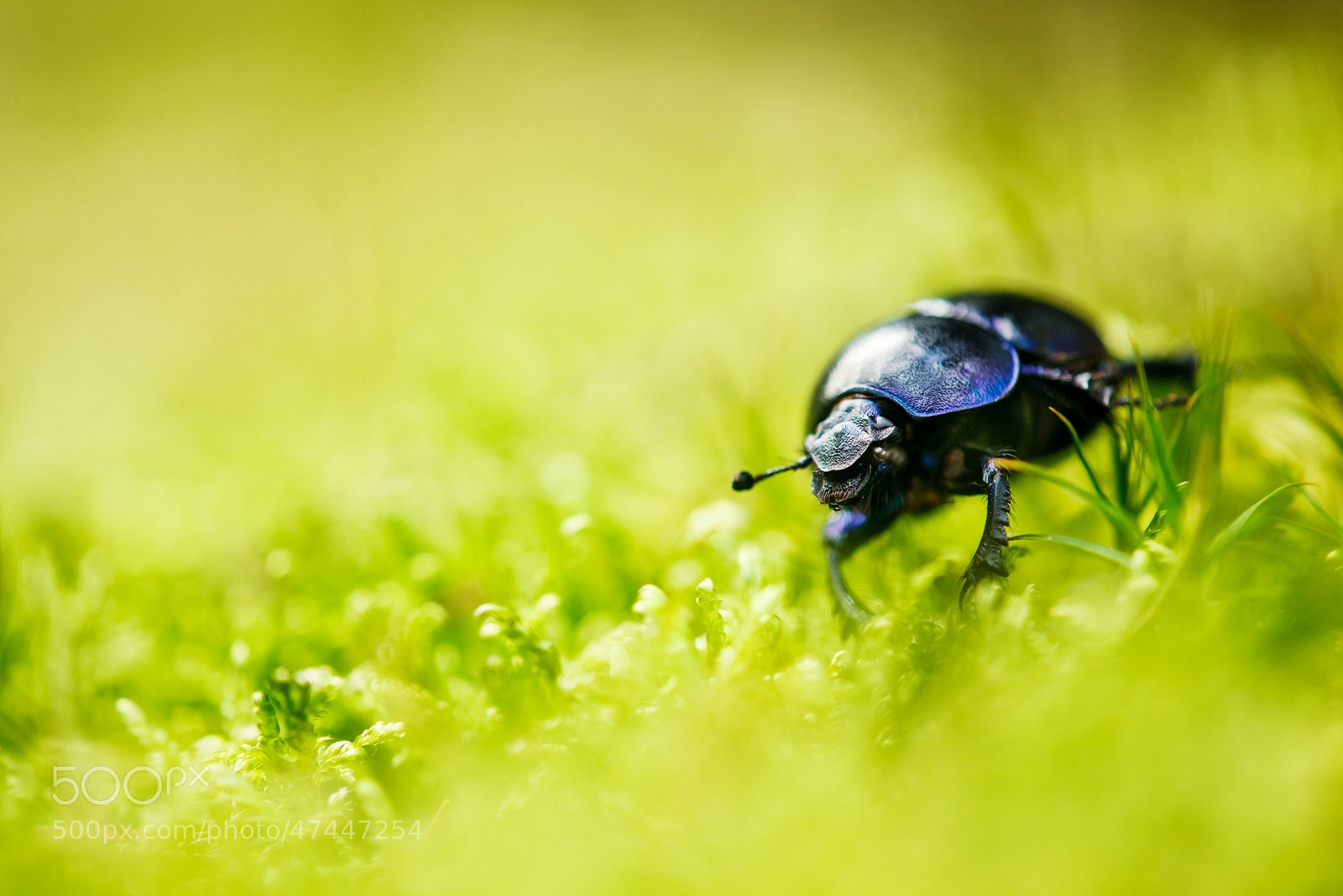 Photograph Bug ahead by Stefan Betz on 500px