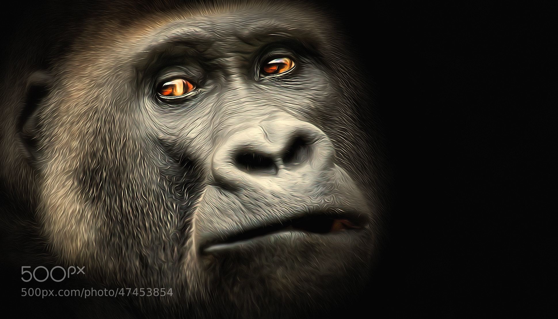 Photograph Gorilla by Detlef Knapp on 500px