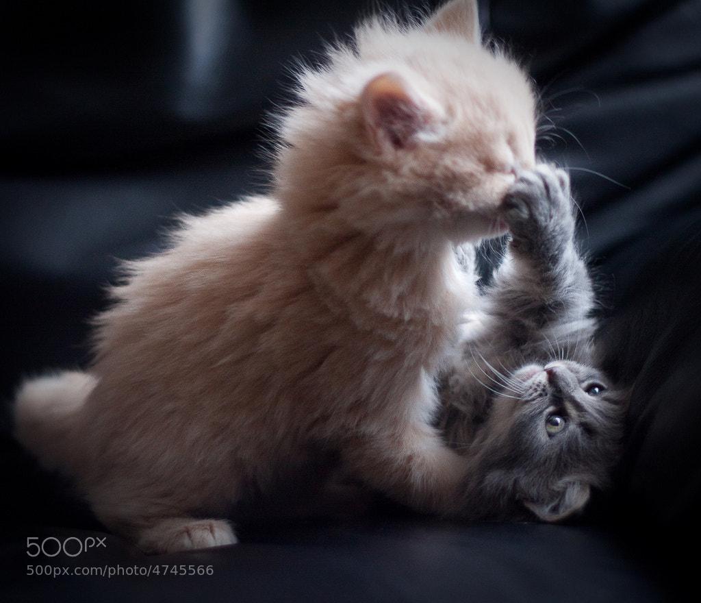 Photograph Fight! by Christian Holmér on 500px