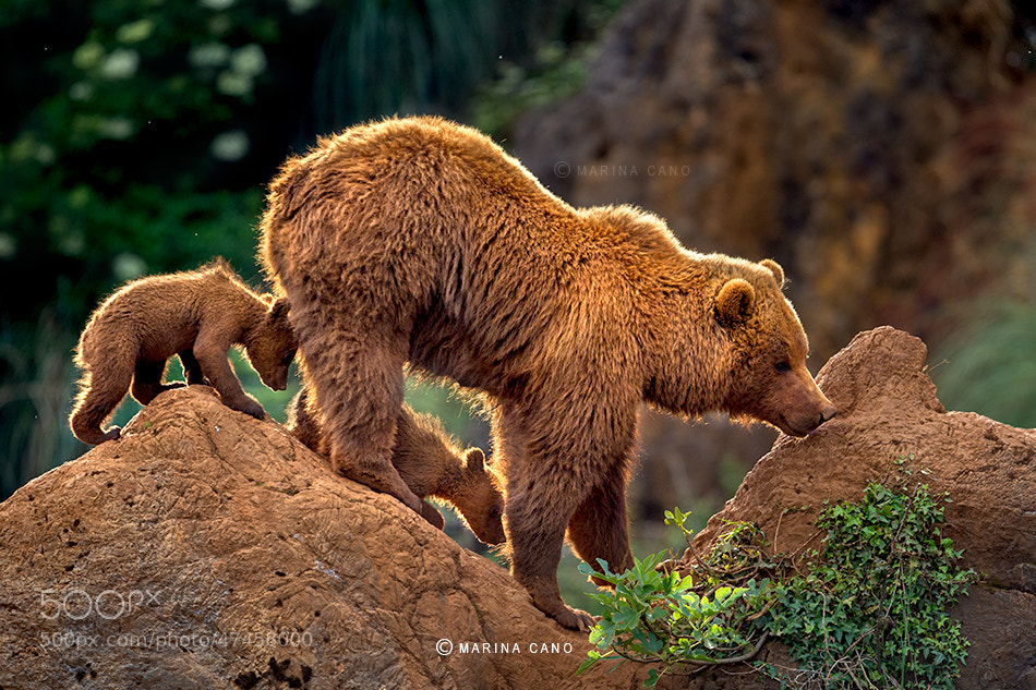 Photograph Cubs by Marina Cano on 500px