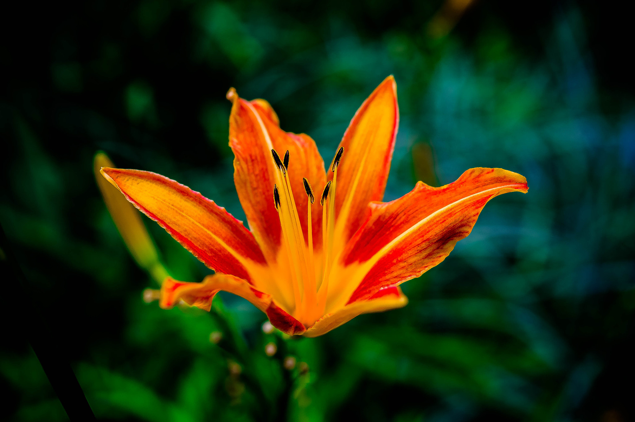 Photograph stand out this summer by ali pourshariati on 500px