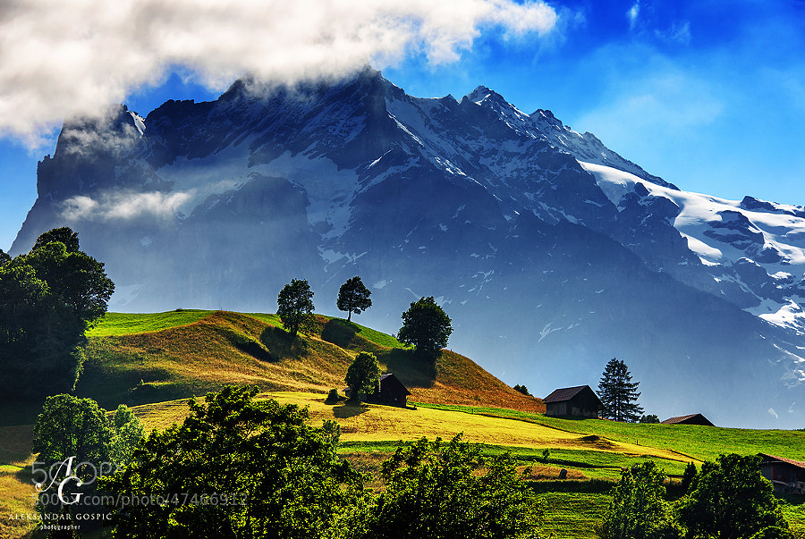Morning in the Grindelwald valley, with towering Wetterhorn (3692m)