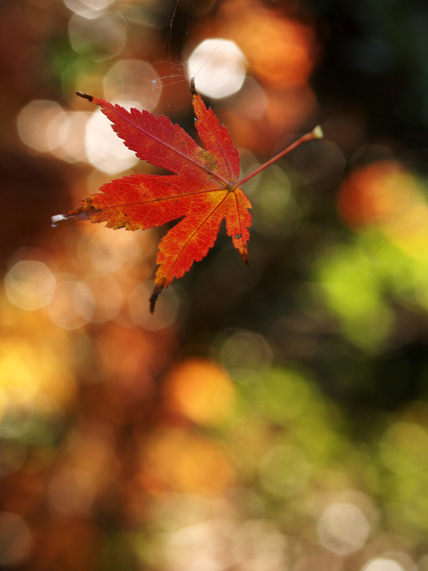 Photograph Leaves of autumn by Haru Nature photo on 500px