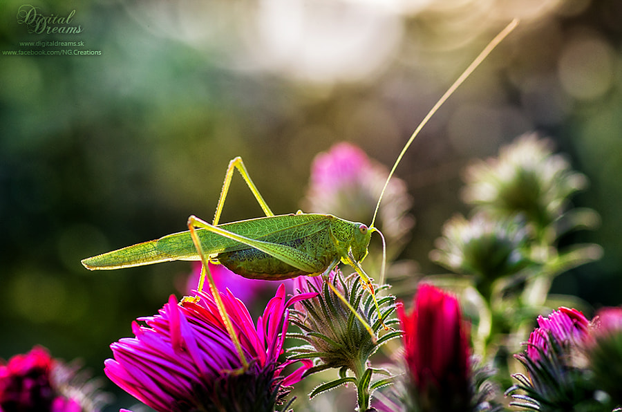 Grasshopper by Norbert G on 500px.com