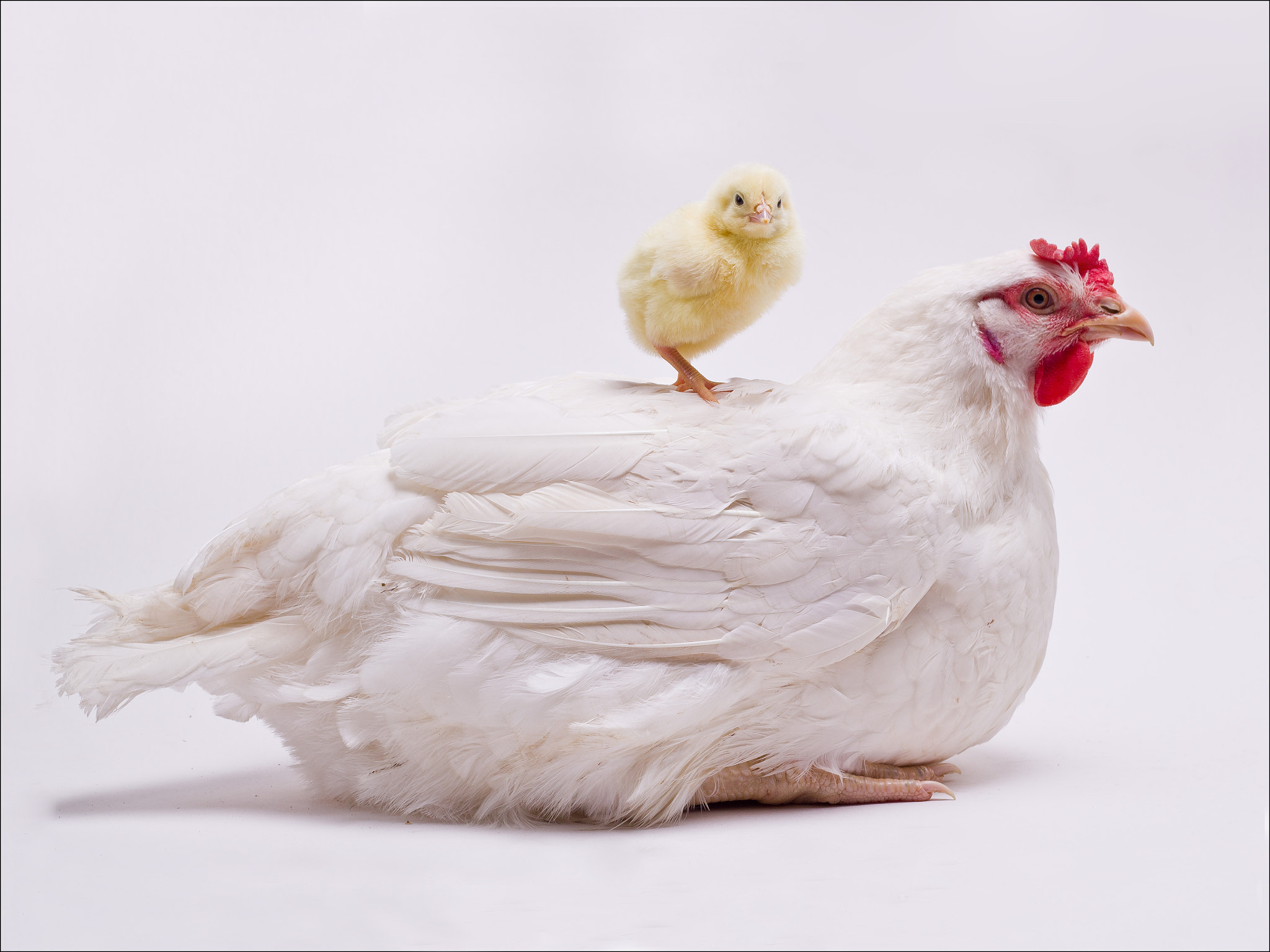Photograph Mother & Daughter by Mark Faulkner on 500px