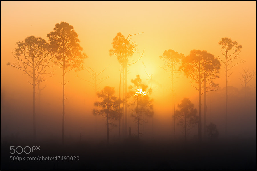 Photograph Sunrise in Florida by Peter Schwarz on 500px