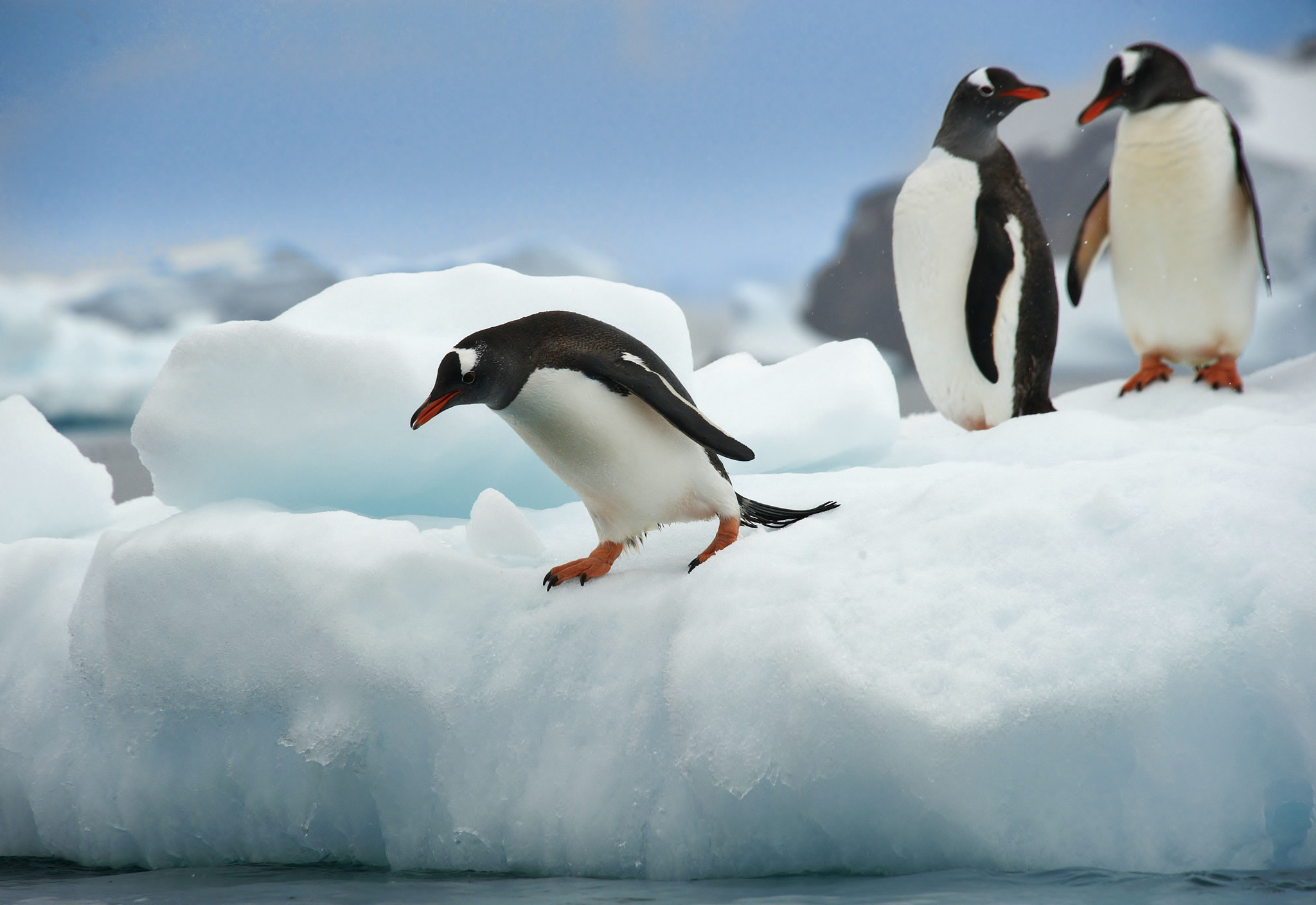 """Photograph """"He is crazy - It´s too hot in the water!"""" by Jørn Allan Pedersen on 500px"""