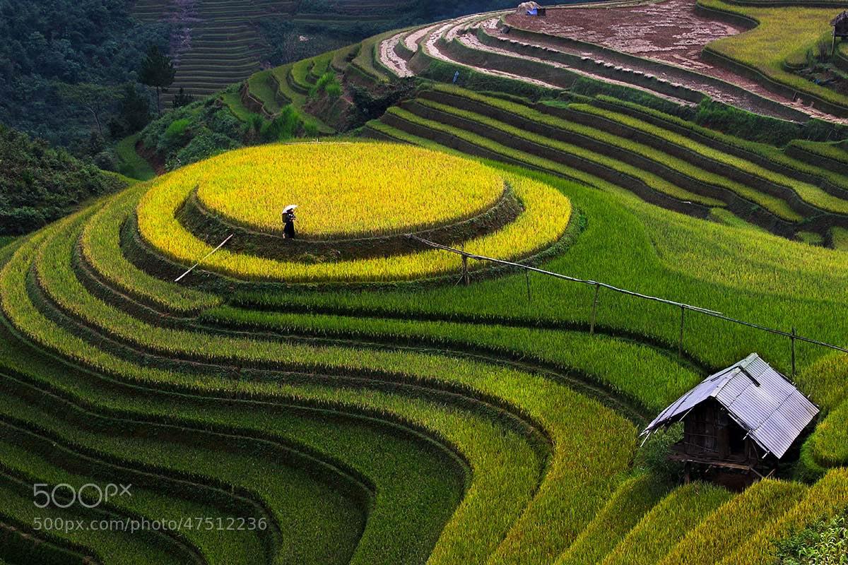 Photograph MÙ CANG CHẢI - VIET NAM by Tuan Nguyen Anh on 500px