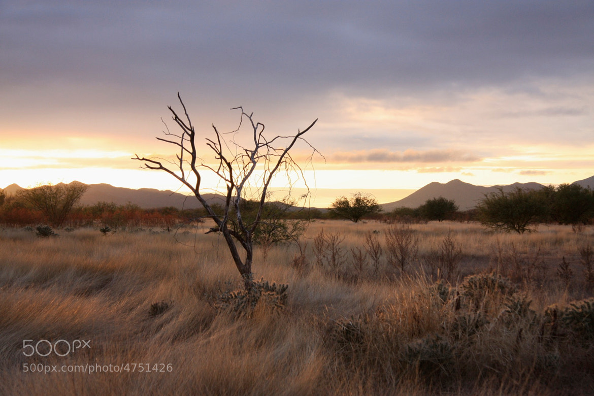 Photograph Sonora Desert by Gerardo Gonzalez on 500px