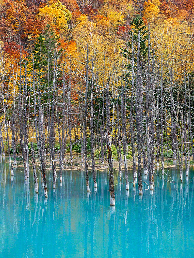 Photograph The Blue Pond in October by Kent Shiraishi on 500px