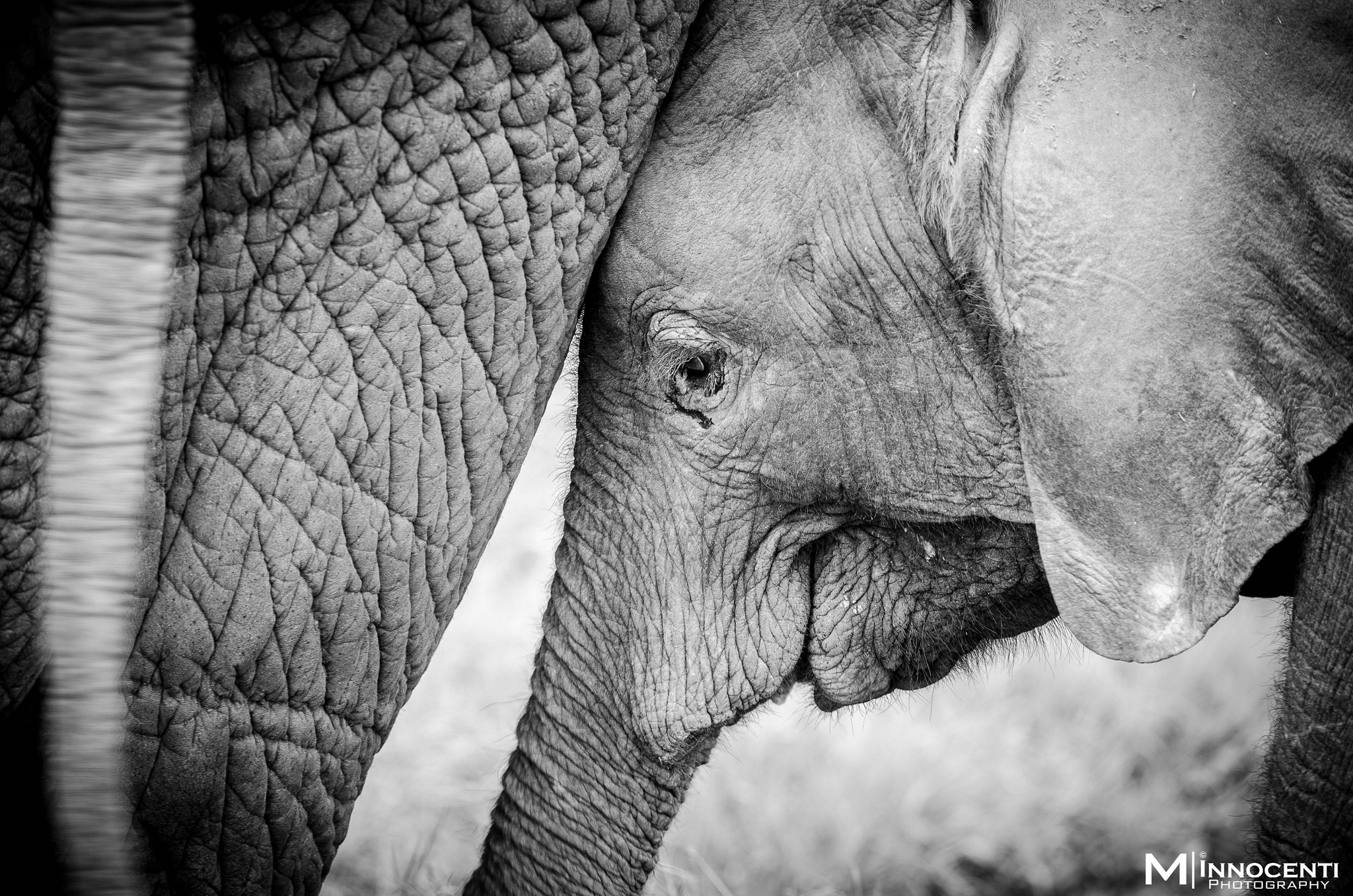 Photograph Elephant cub by Matteo Innocenti on 500px