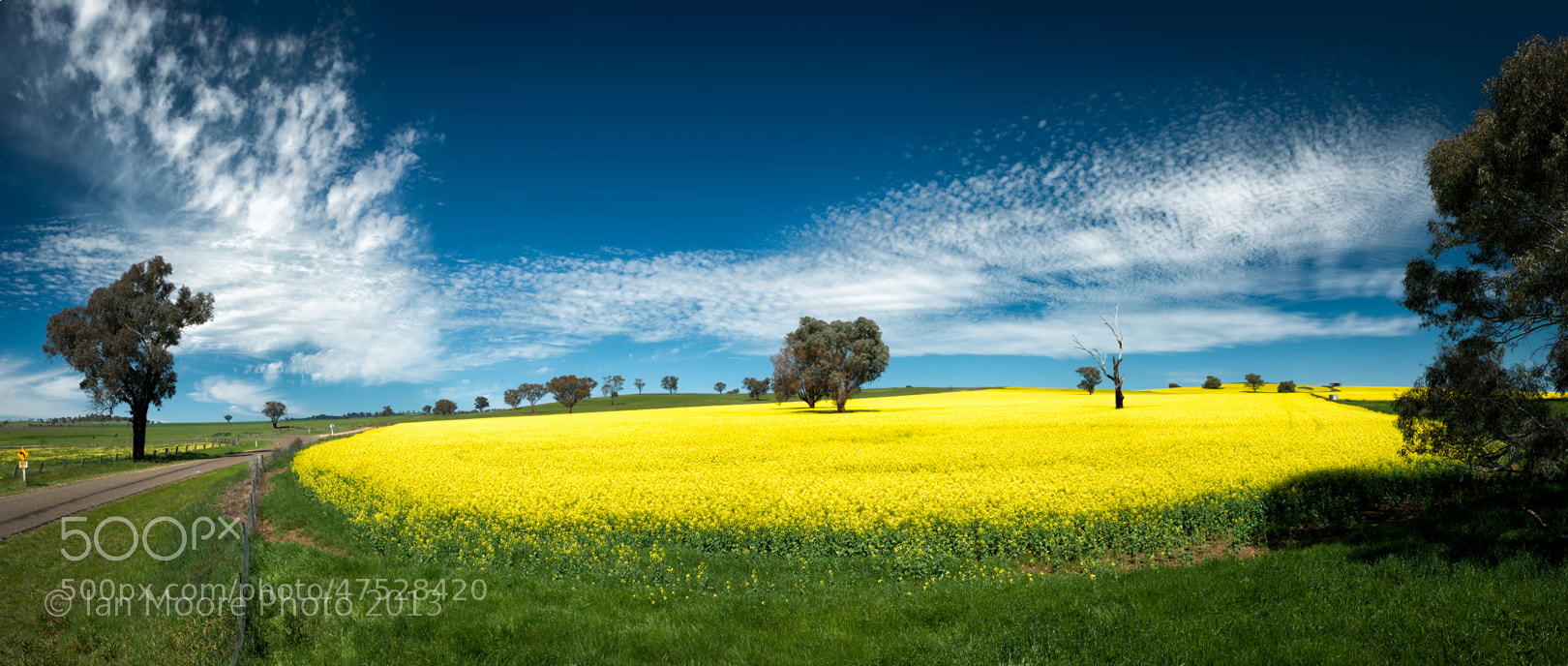 Photograph Canola fields by Ian Moore on 500px