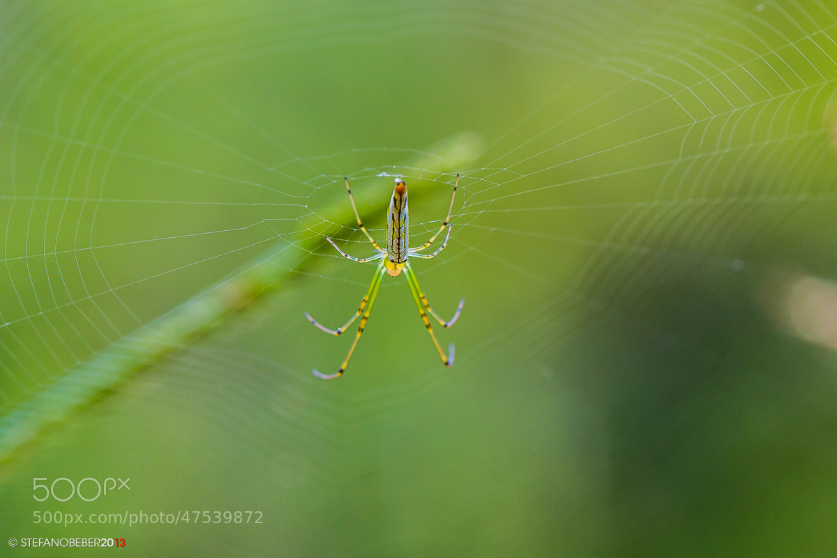 Photograph Small spider by Stefano Beber on 500px