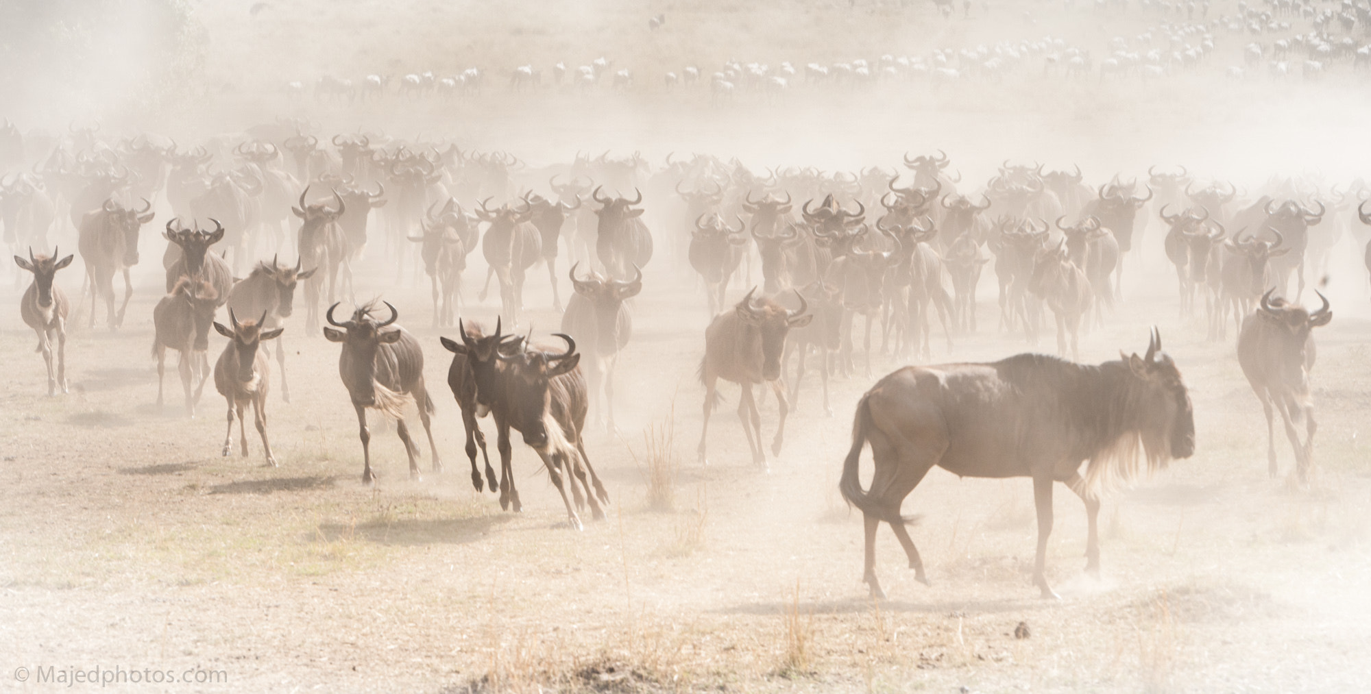 Photograph Crossing by majed Sultan on 500px