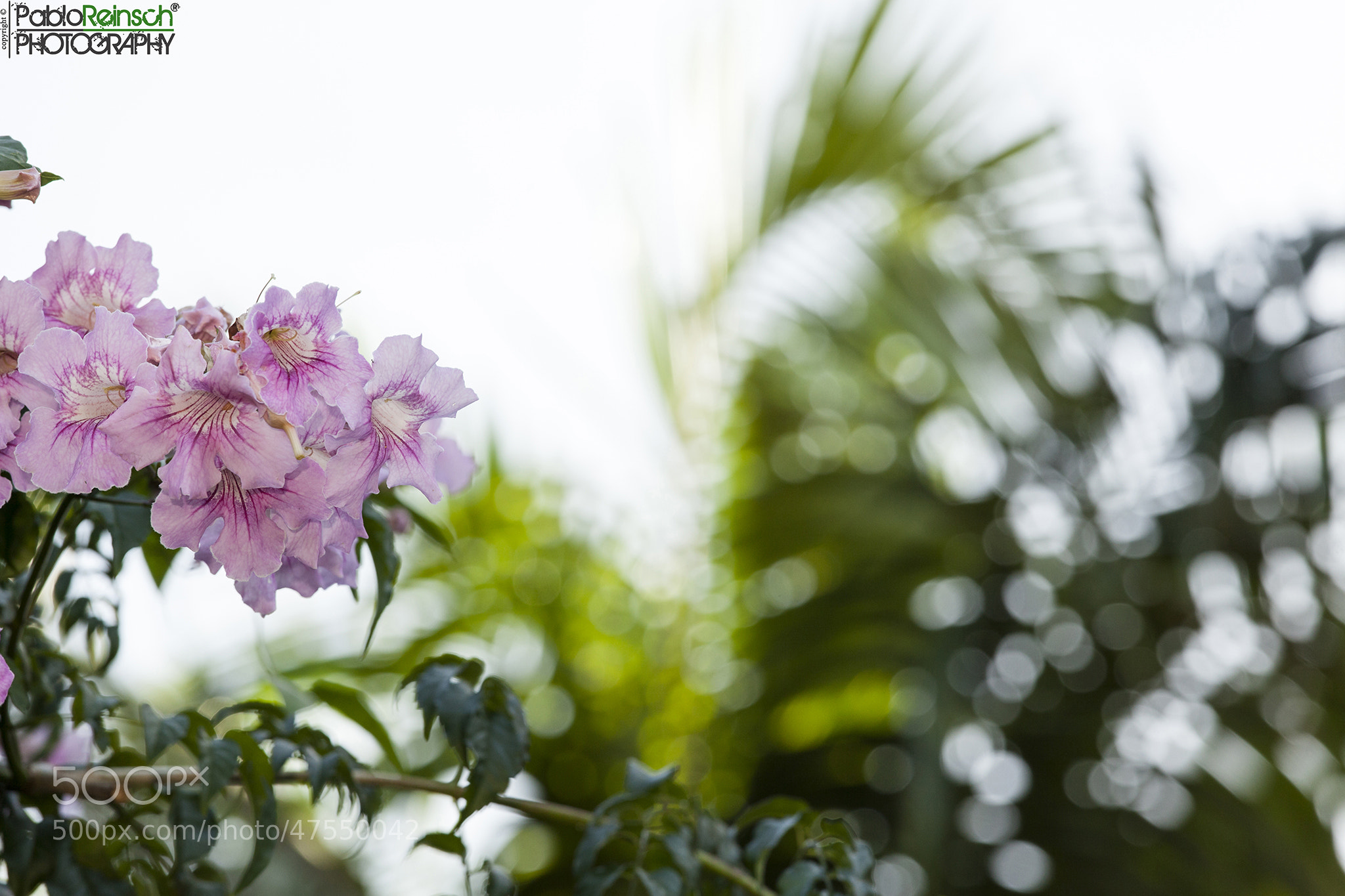 Photograph Flores.- by Pablo Reinsch on 500px