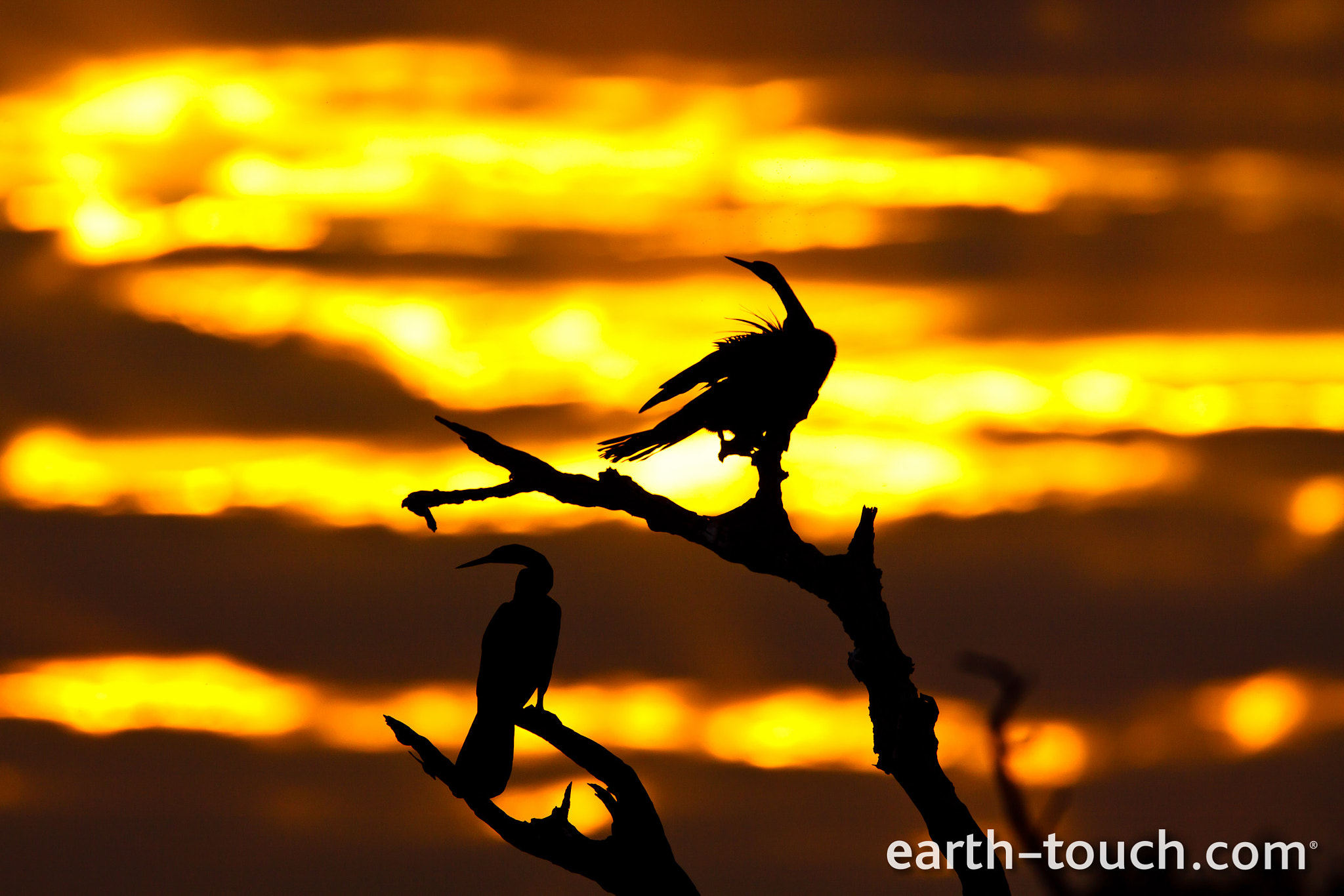 Photograph Sunset silhouette by Earth Touch on 500px