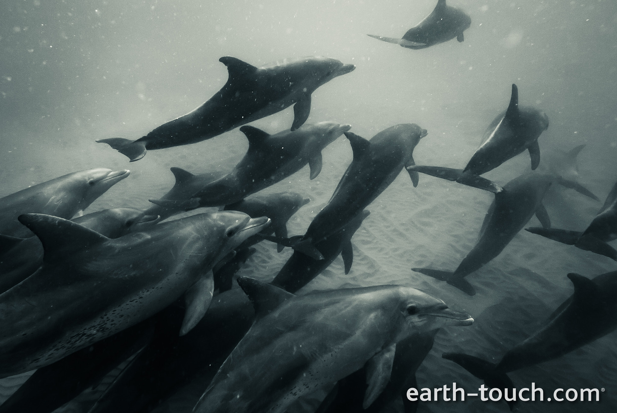 Photograph Dolphins in the deep by Earth Touch on 500px