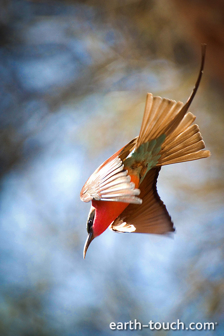 Photograph Swooping down by Earth Touch on 500px