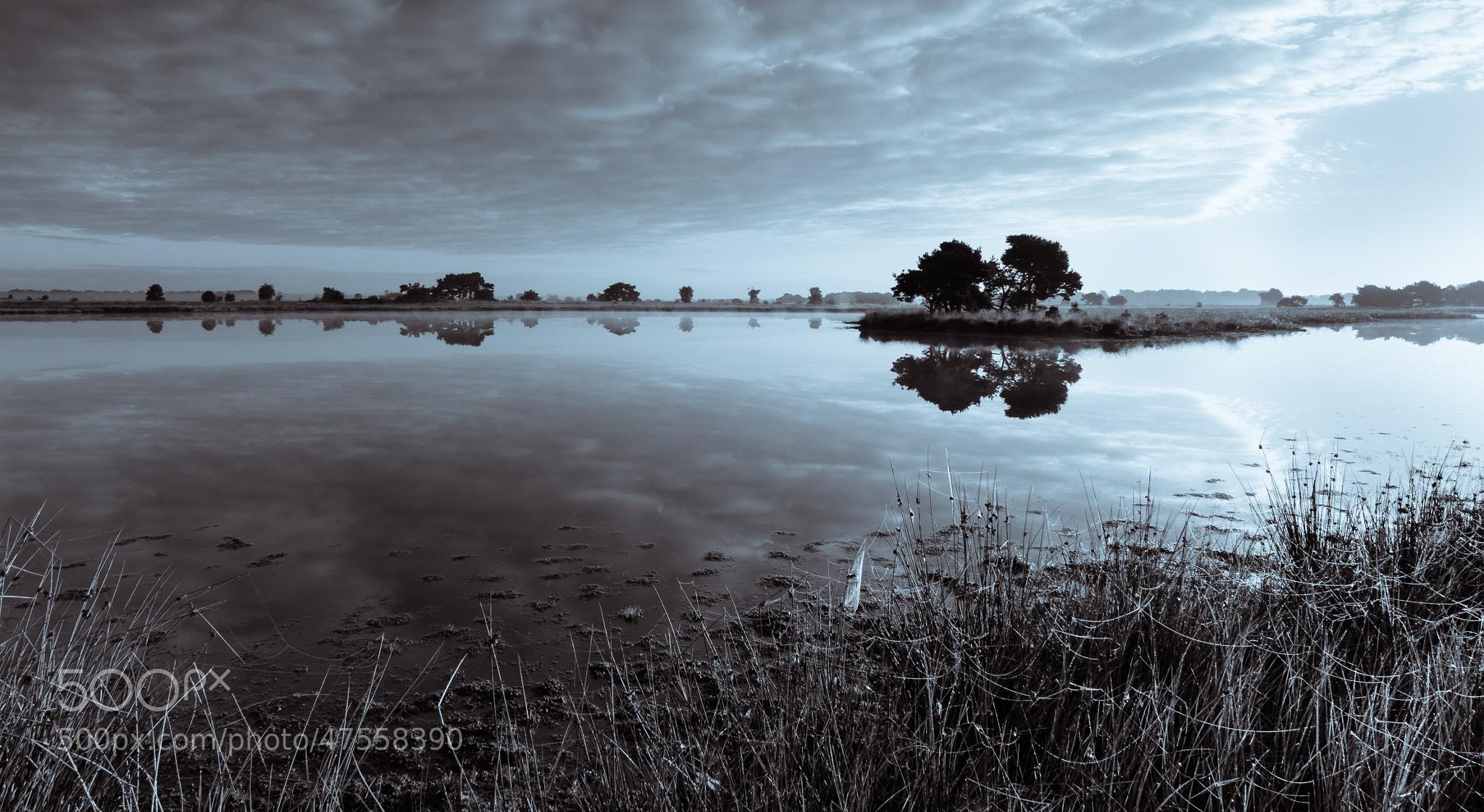 Photograph Strabrechtse Heide 148 by Mr. DESHAMER on 500px