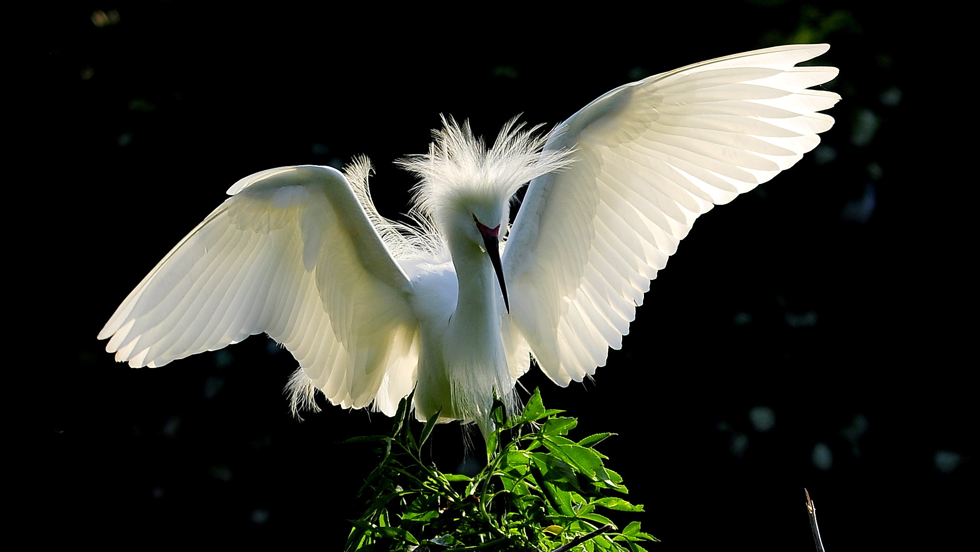Photograph Snowy Egret by Peter Michael on 500px