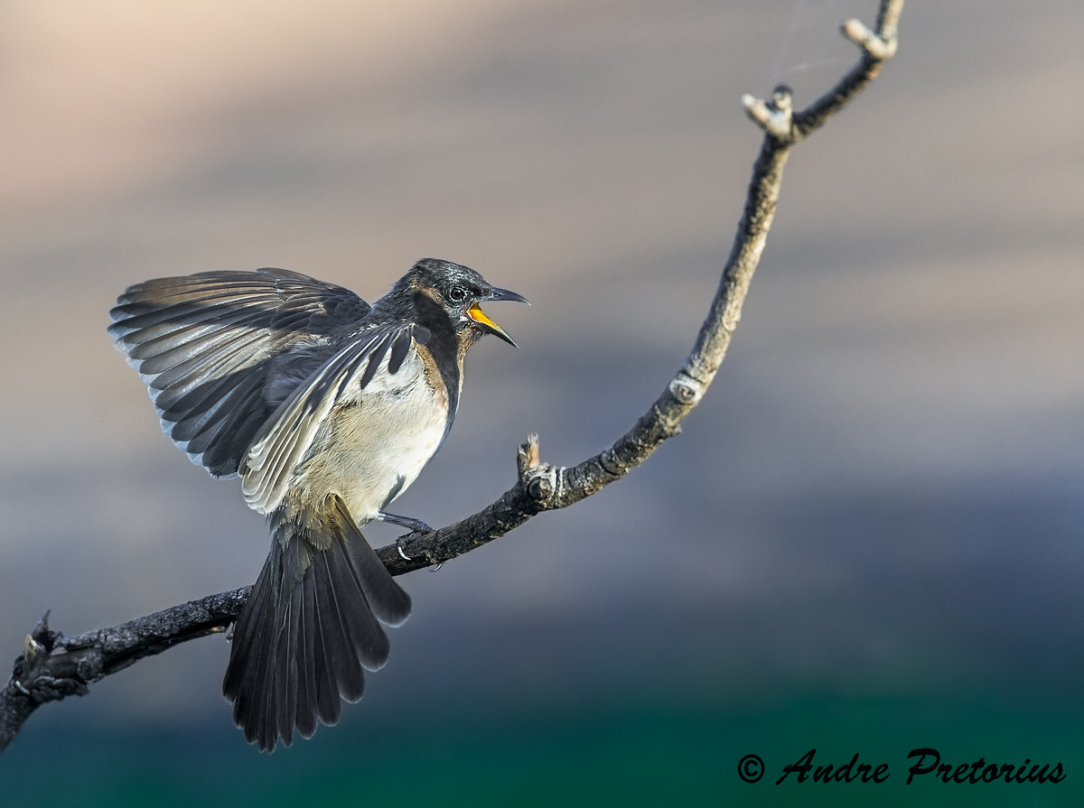 Photograph The Protester by Andre Pretorius on 500px