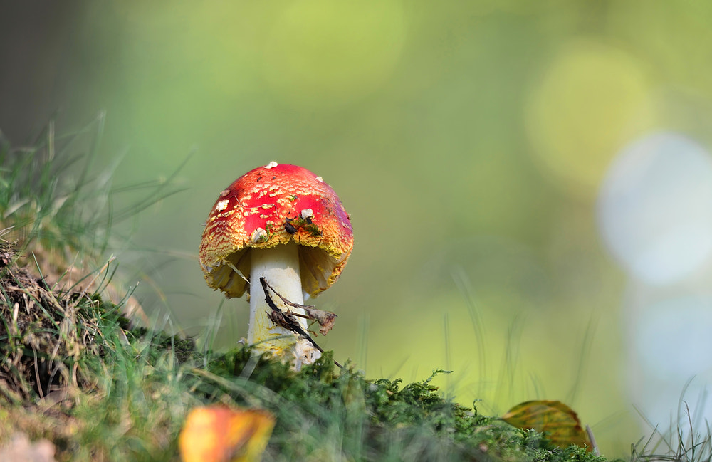 Photograph red cap in the forest by Silvio E. on 500px
