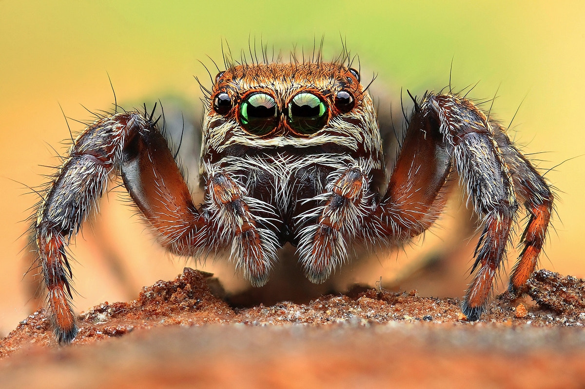 Photograph Jumper by Dusan Beno on 500px